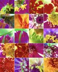 flower_collage_photo_ca47hab.jpg